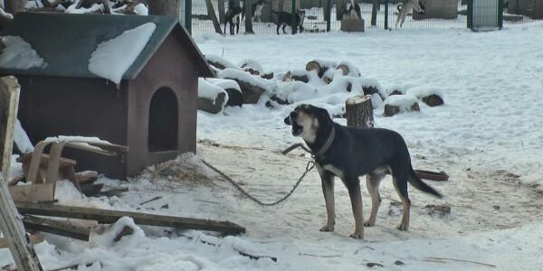 Собаки.mpg_20210211_082438.019